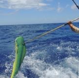 Dolphin Fishing St Thomas