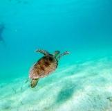 snorkeling4